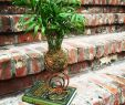 Upcycling Ideen Garten Genial Parlor Palm Kokedama On An Upcycled Stand Hand Painted