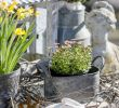 Vintage Deko Garten Luxus Gartensaison ist Eröffnet Oder Mein Garten Ende Februar