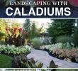Vorgarten Gestalten Pflegeleicht Genial Landschaftsgestaltung Leicht Gemacht Mit Caladiums