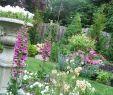 Vorgartengestaltung Schön Landscaping Ideas for Front Yard Ranch House