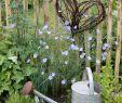Weiden Deko Garten Neu Die 1036 Besten Bilder Von Garten In 2020