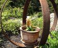 Weinfass Deko Garten Genial Pin On Garden