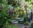 Weinlaube Selber Bauen Einzigartig Die 244 Besten Bilder Von Garten Chill Out Zone