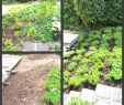 Wie Gestalte Ich Meinen Vorgarten Neu Gartenbeet Anlegen Beispiele