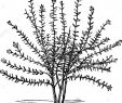 Winterharte Pflanzen Für Den Garten Elegant Buchjahr1868 Stockfotos & Buchjahr1868 Bilder Alamy