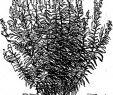 Winterharte Pflanzen Für Den Garten Frisch Buchjahr1868 Stockfotos & Buchjahr1868 Bilder Alamy
