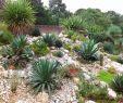Zen Garten Deko Luxus Pin On Home Garden Ideas