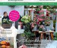Ausgefallen Dekoideen Garten Elegant Calaméo Meinpara S 5 2016 Schleys