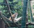 Bahnhof Zoologischer Garten Best Of Oliwa Zoo Gdansk 2020 All You Need to Know before You Go