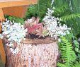 Baumstumpf Deko Ideen Frisch Holzstamm Deko Garten