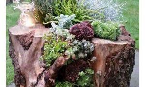 92 Schön Baumstumpf Garten Dekorieren