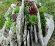 Baumstumpf Garten Dekorieren Neu Stunning Rock Garden Landscaping Design Ideas 75