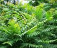 Baumstumpf Verschönern Neu Götterbaum –