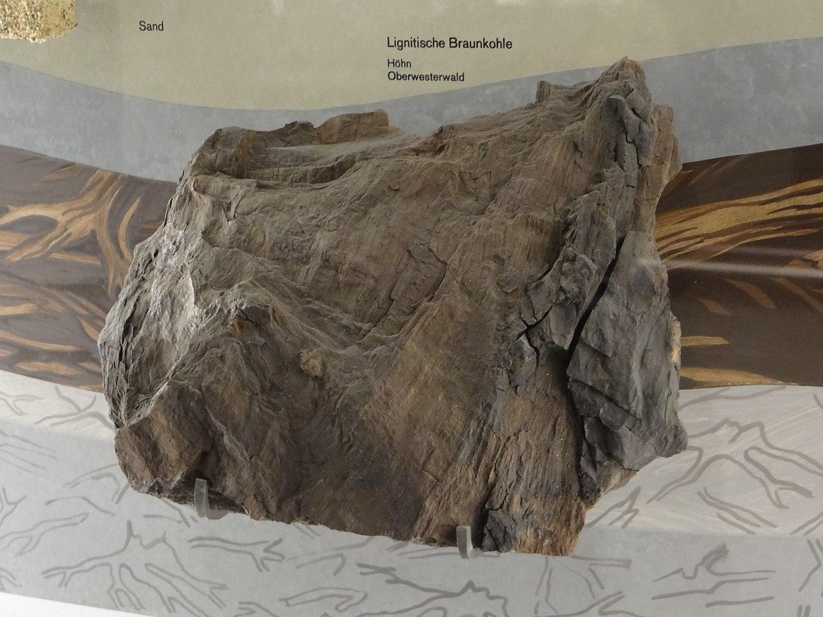 1200px DBM Deutsches Bergbau Museum Bochum Lignit Westerwald JPG