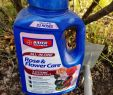 Bayer Garten Frisch 3 Care Tips for Knock Out Roses