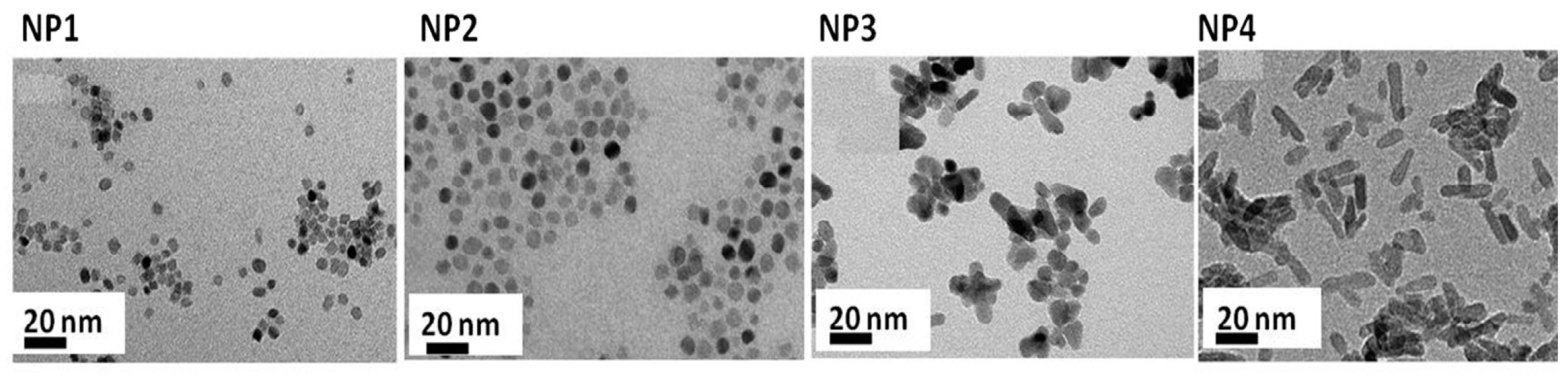 nanomaterials 10 g009