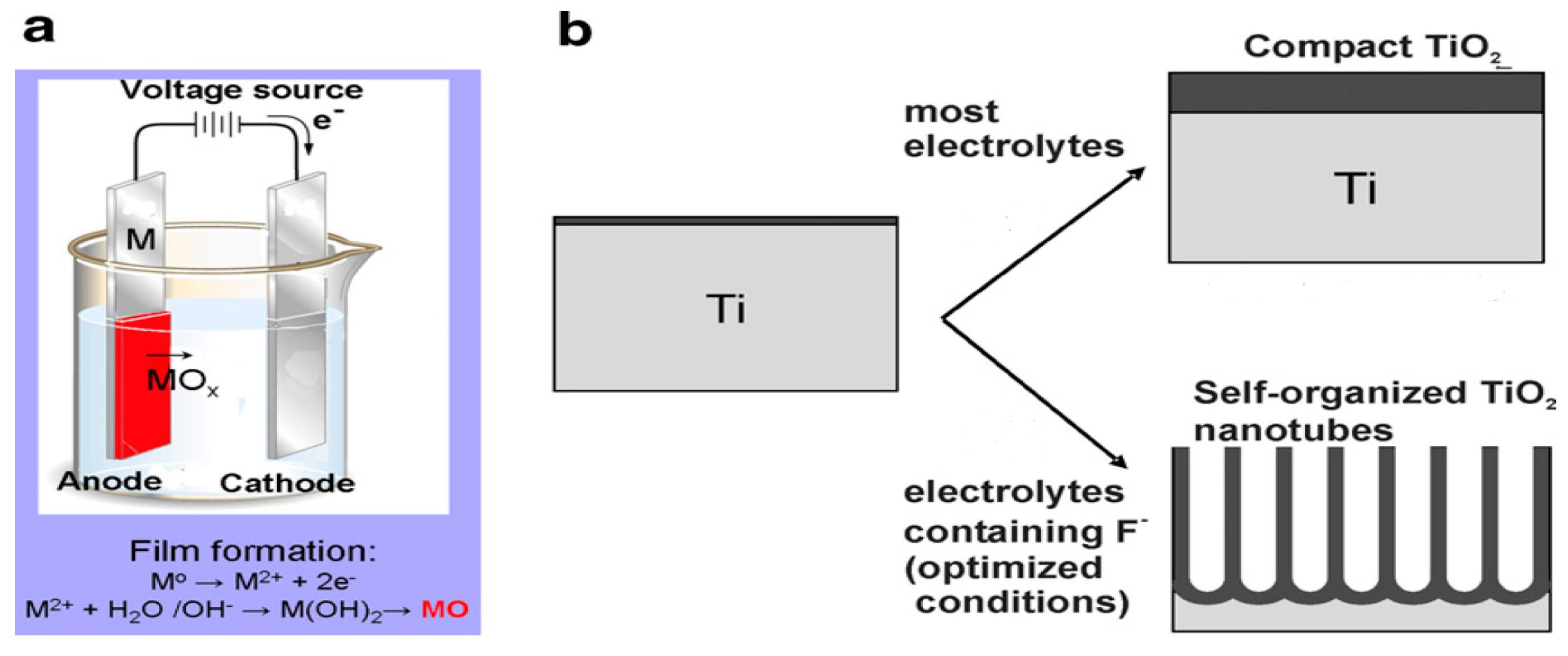 nanomaterials 10 g011