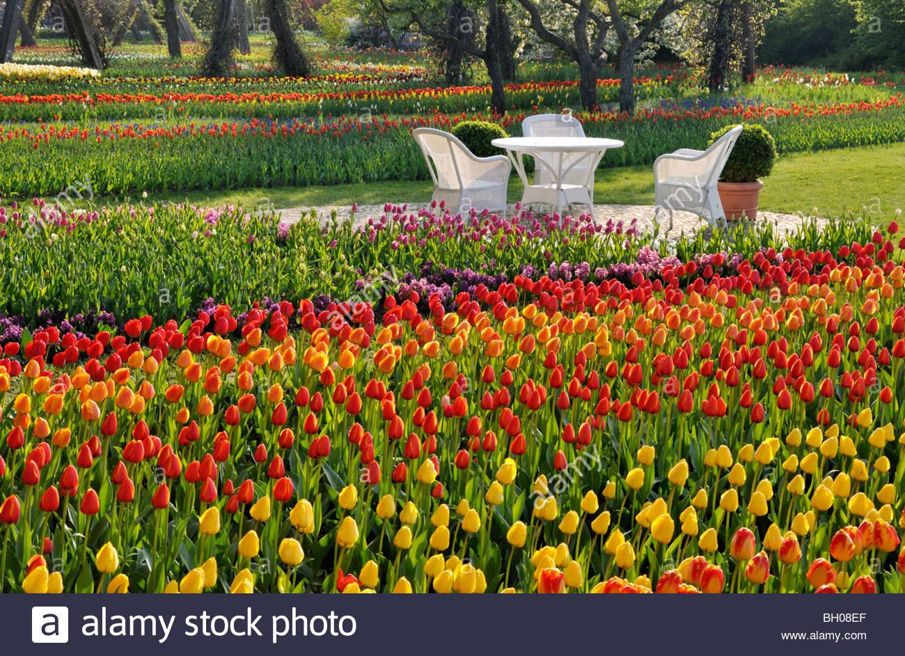 Berlin Britzer Garten Best Of Tulipan Stock S & Tulipan Stock Page 2 Alamy