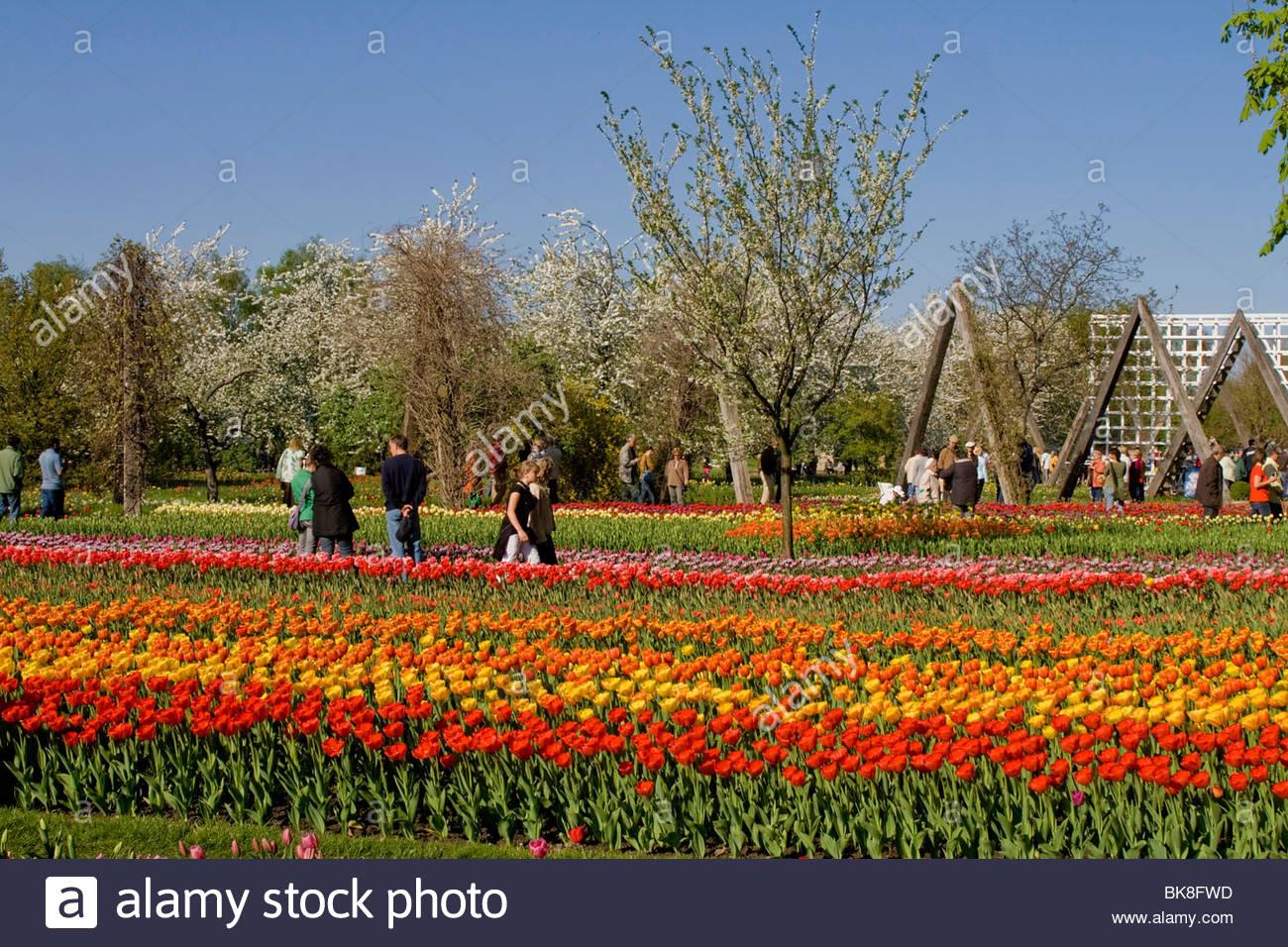 Berlin Britzer Garten Genial Tulipan Stock S & Tulipan Stock Page 2 Alamy