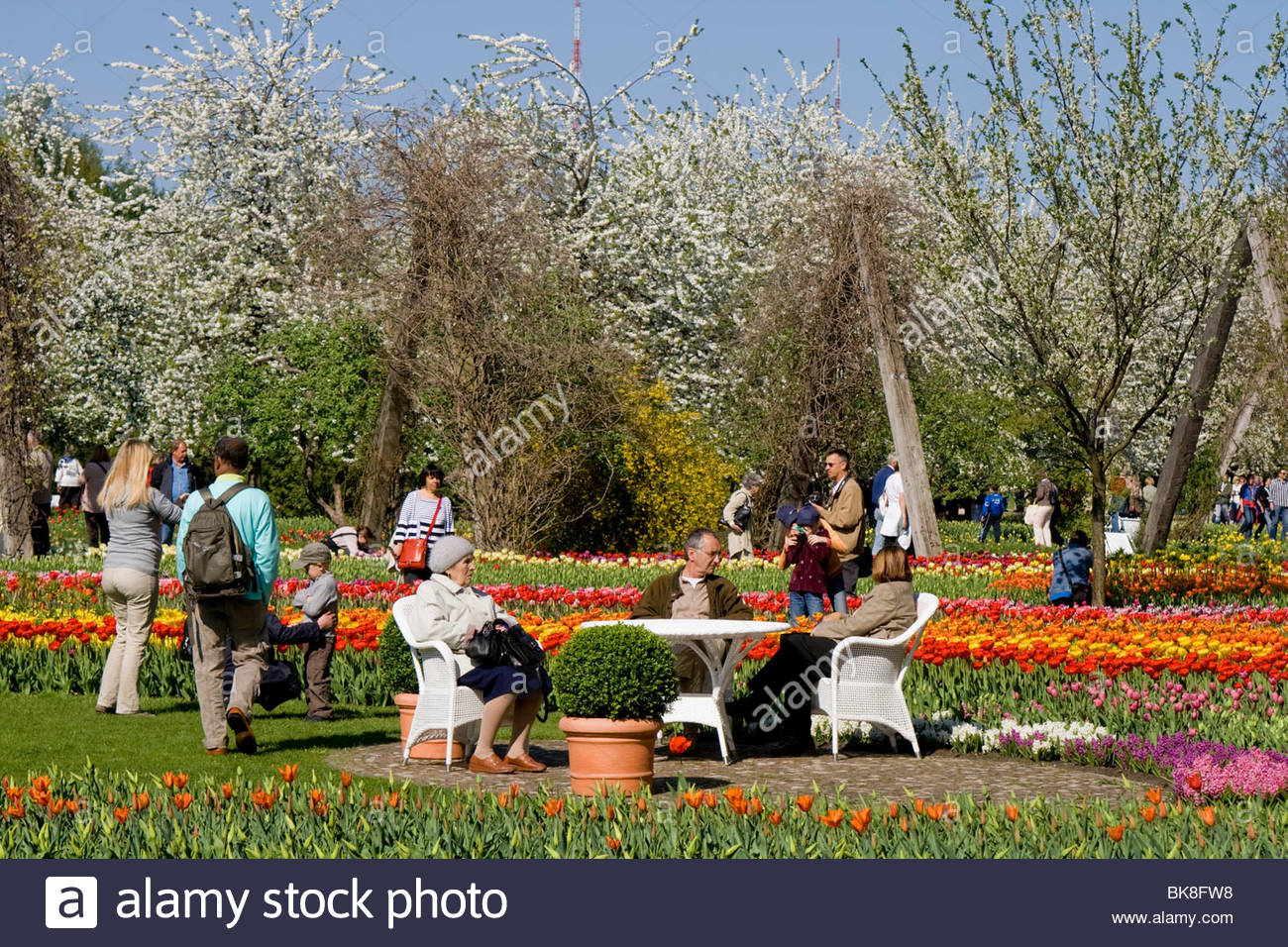 tulip show tulipan in the britzer garden park berlin germany europe BK8FW8
