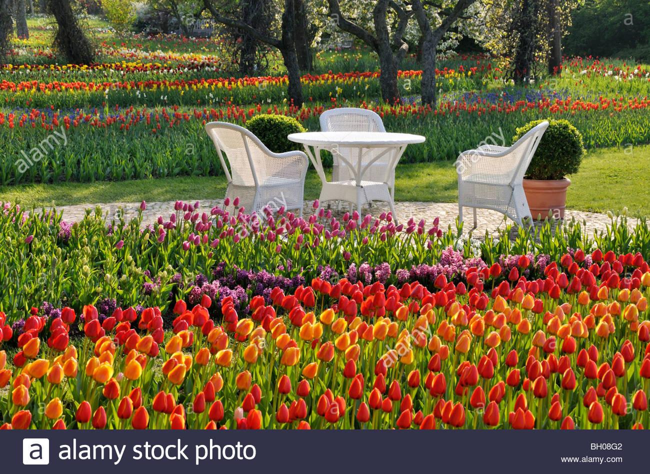 Berlin Britzer Garten Luxus Tulipan Stock S & Tulipan Stock Page 2 Alamy