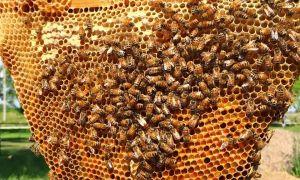 77 Elegant Bienen Im Garten