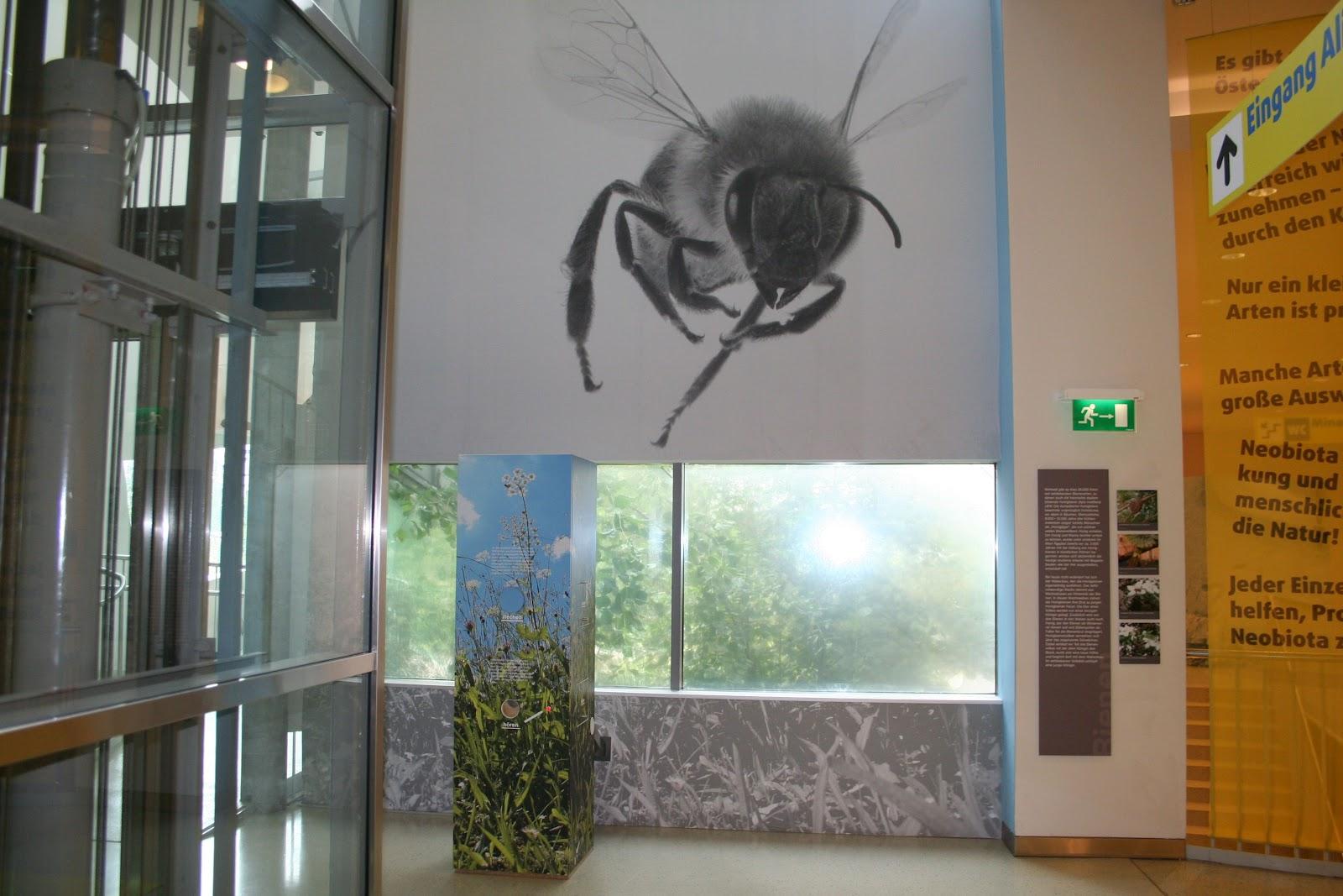 Bienen MonikaSchaar %