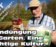 """Bienenstock Im Garten Luxus Gründüngung Aussäen Phacelia Aus Der """"ich Perspektive"""" Wie Live Dabei"""