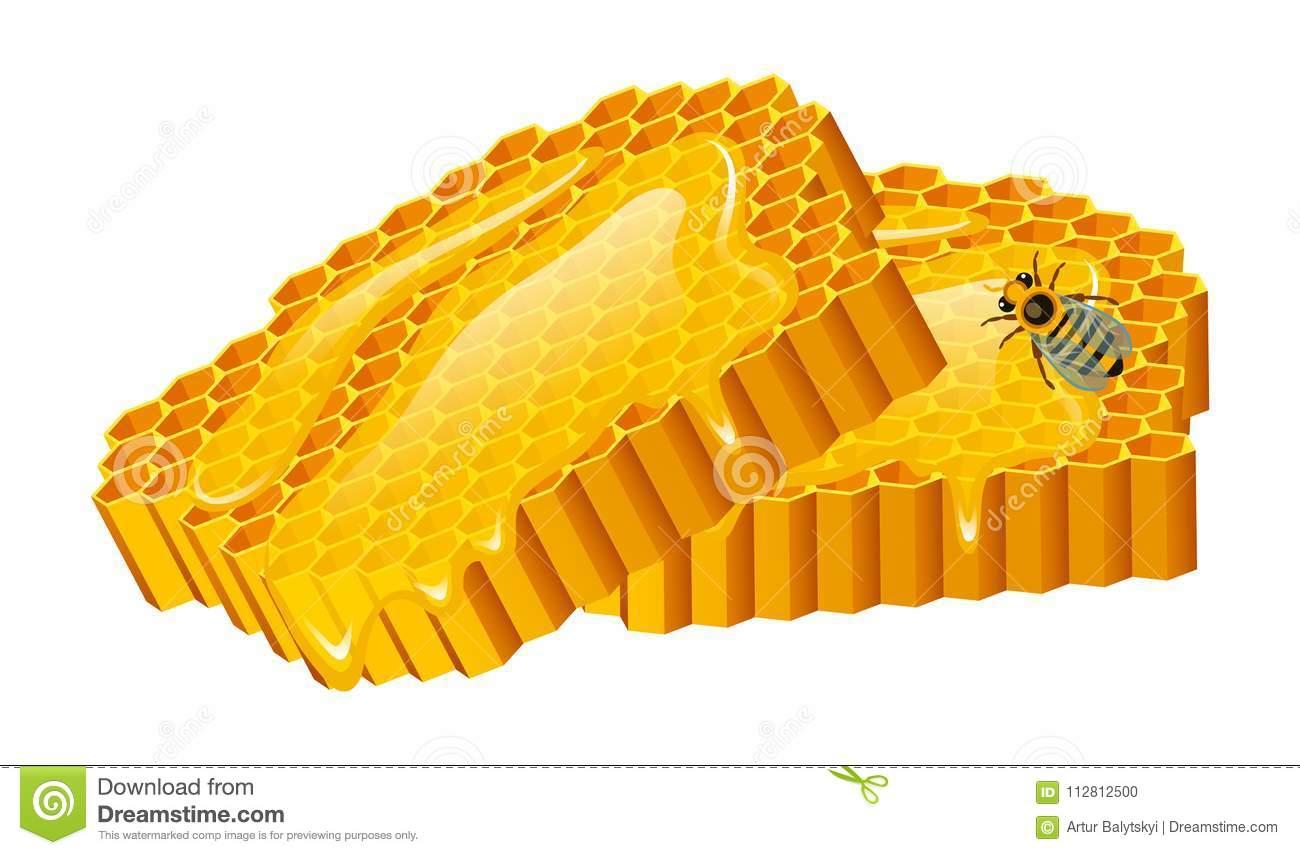 honigsatz biene und bienenstock bienenwabe bienenhaus natürliches landwirtschaftliches produkt imkerei oder garten blumenkamille