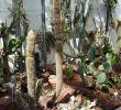 Botanischer Garten Augsburg Programm Frisch Botanischer Garten Augsburg – Bayerisch Schwaben Blog