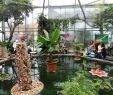 Botanischer Garten Augsburg Programm Frisch Schmetterlinge Im Botanischen Garten Augsburg Bayern