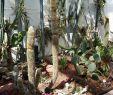 Botanischer Garten Augsburg Schmetterlinge Best Of Botanischer Garten Augsburg – Bayerisch Schwaben Blog