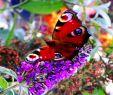 Botanischer Garten Augsburg Schmetterlinge Best Of soya butter Fly Augsburg Botanischer Garten Schmetterling