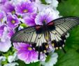 Botanischer Garten Augsburg Schmetterlinge Einzigartig Faszination Tropischer Schmetterlinge