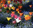 Botanischer Garten Augsburg Schmetterlinge Einzigartig ort Botanischer Garten