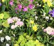 Botanischer Garten Augsburg Schmetterlinge Inspirierend Vorfrühling Im Botanischen Garten Augsburg