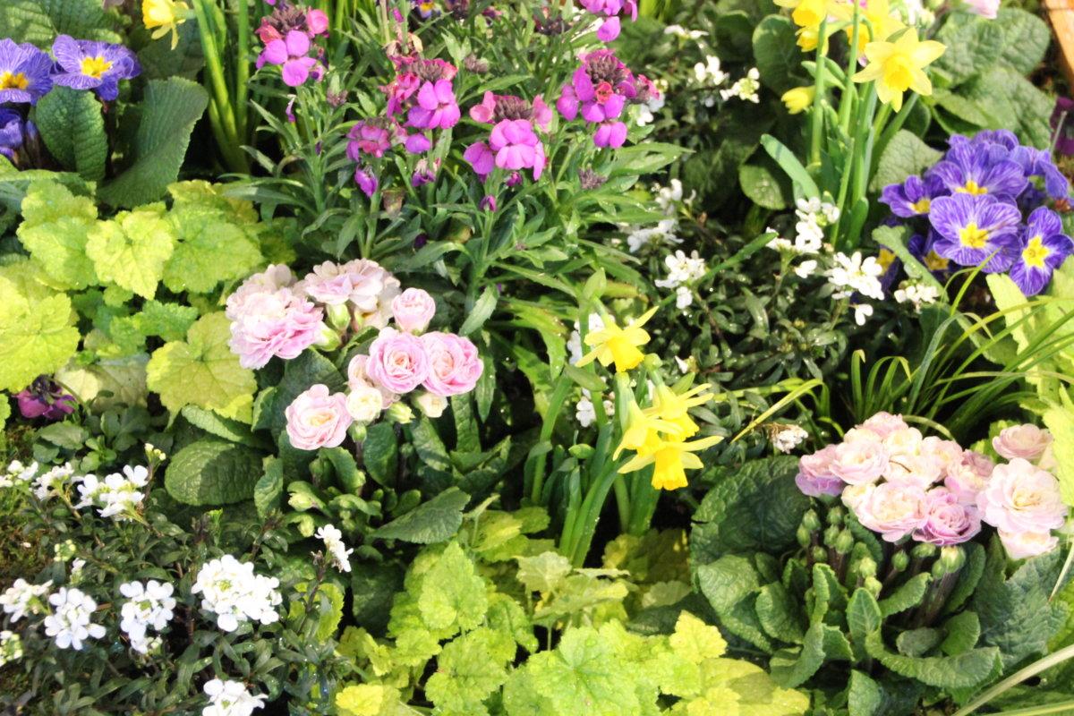 18 03 13 Frühling im Botanischen Garten Foto Stadt Augsburg Botanischer Garten 2