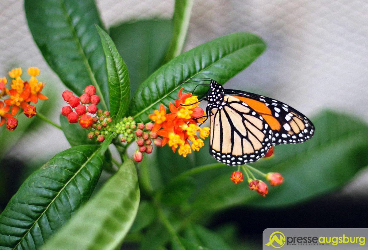 Botanischer Garten Augsburg Schmetterlinge Schön Botanischer Garten Augsburg