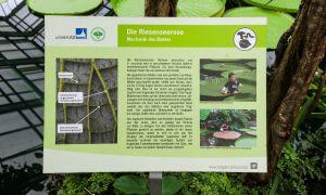 59 Schön Botanischer Garten Bonn