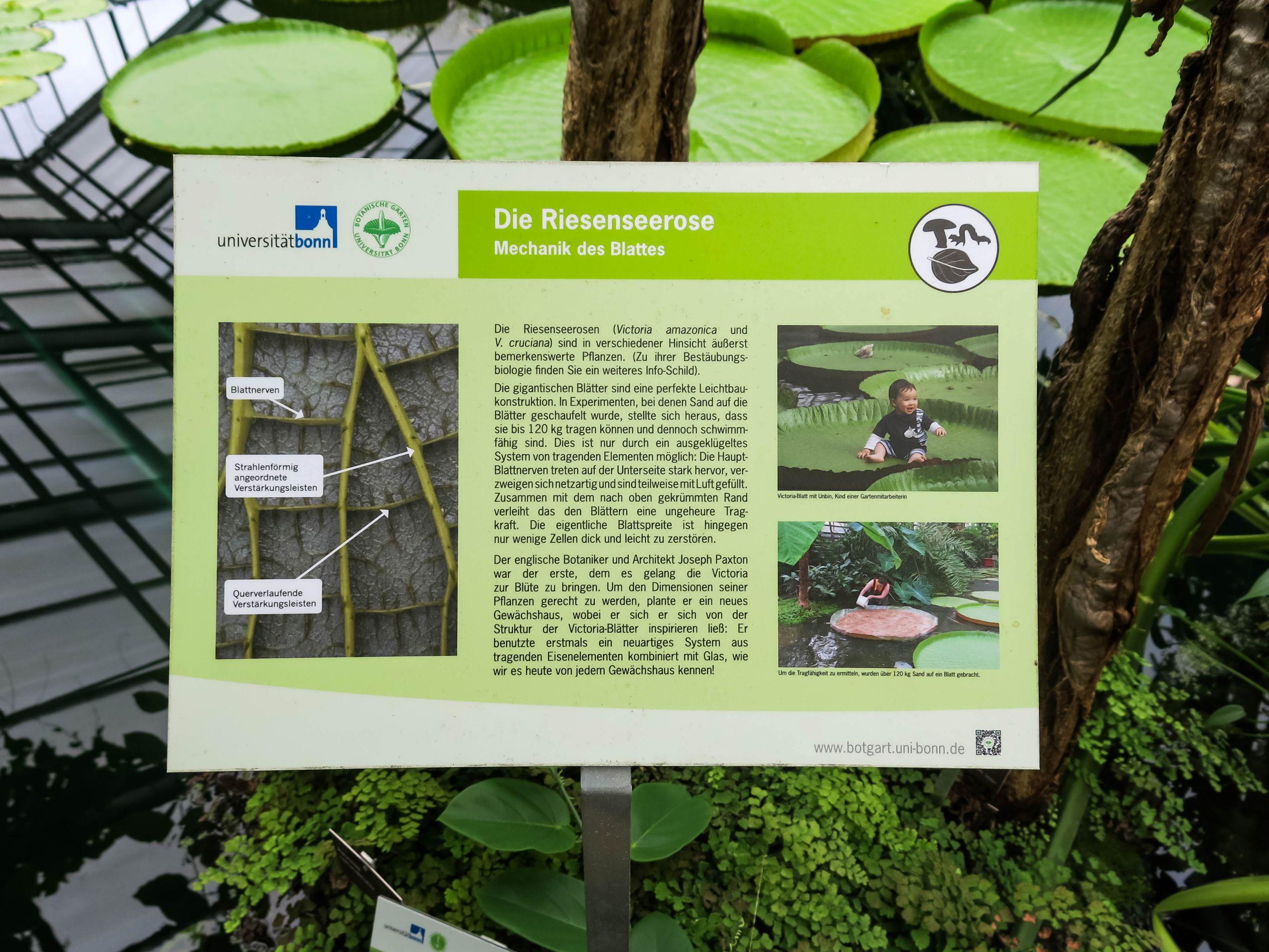 Botanischer Garten Bonn Genial File 2018 06 18 Bonn Meckenheimer Allee 169 Botanischer