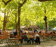 Botanischer Garten Dresden Einzigartig the Best Munich Beer Gardens