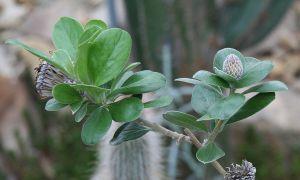 84 Best Of Botanischer Garten Dresden