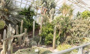 21 Luxus Botanischer Garten Halle