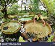Botanischer Garten Halle Luxus Wittenberg District Stock S & Wittenberg District Stock