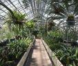 Botanischer Garten Heidelberg Elegant Botanischer Garten Der Universitat Heidelberg 2020 All You