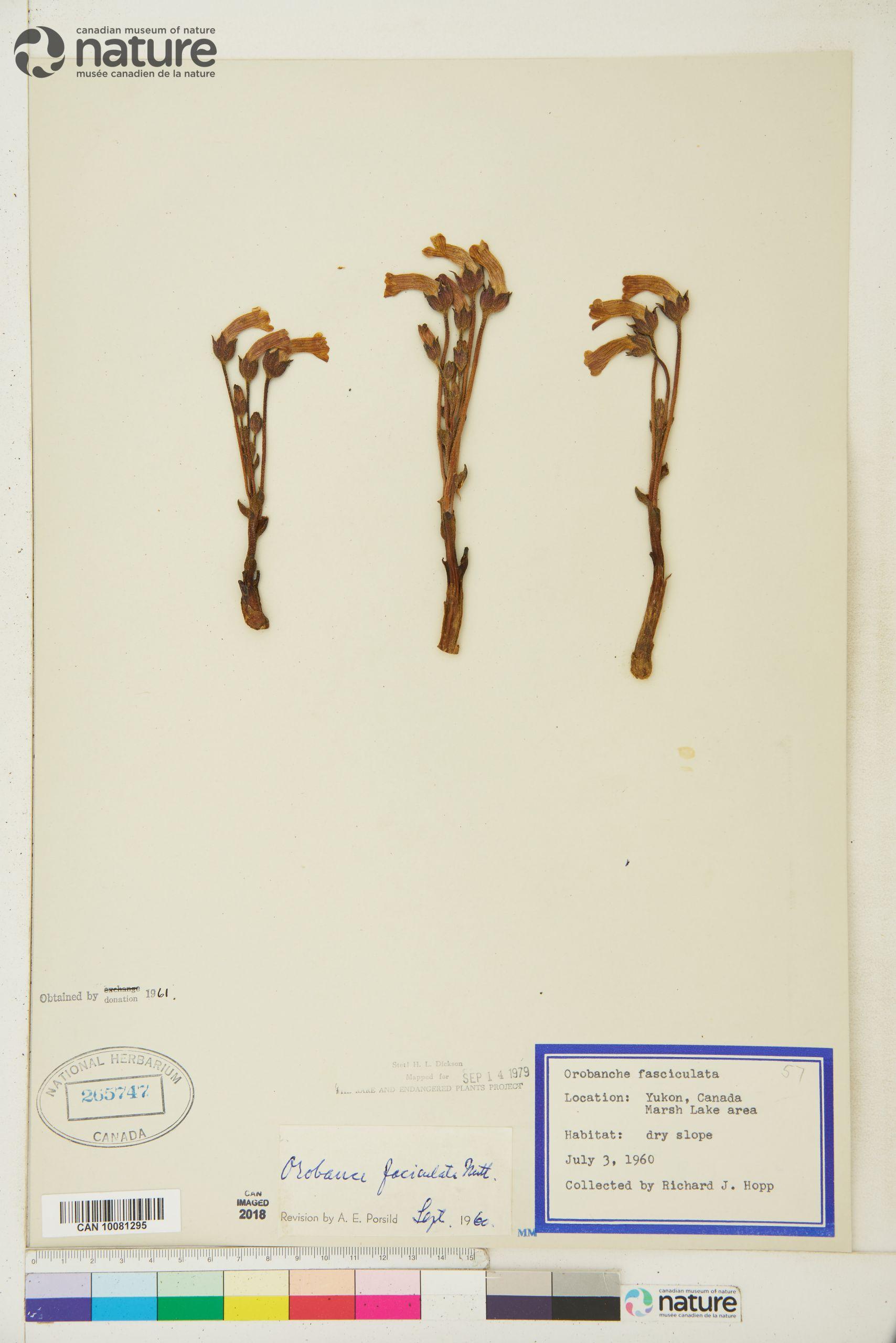 Botanischer Garten Heidelberg Luxus References [index Of orobanchaceae]