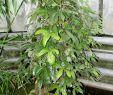Botanischer Garten Heidelberg Schön Aristolochia Stock S & Aristolochia Stock Page
