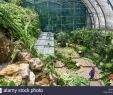 Botanischer Garten Jena Frisch T3 Plants Stock S & T3 Plants Stock Alamy