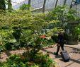 Botanischer Garten Jena Inspirierend T3 Plants Stock S & T3 Plants Stock Alamy