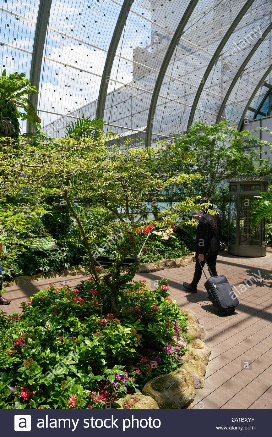 singapore circa april 2019 interior shot of butterfly garden in changi international airport 2A1BXYF